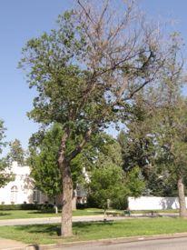 treedrought.jpg