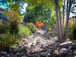 No-Lawn-Landscape---Pat-Sullivan