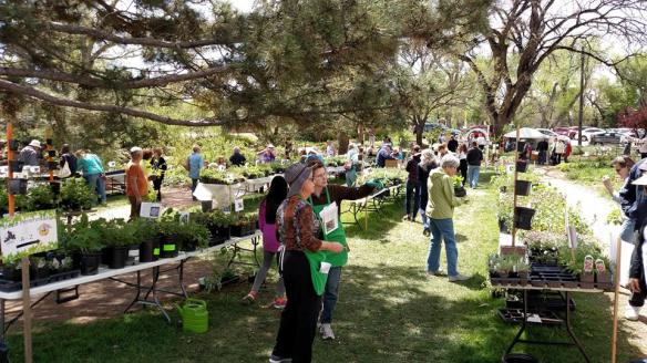 Outdoor setting for Gigantic Plant Sale